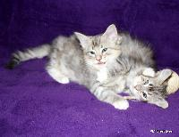 galleries/kittens/272/3.jpg