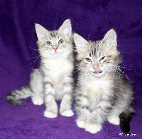 galleries/kittens/272/5.jpg